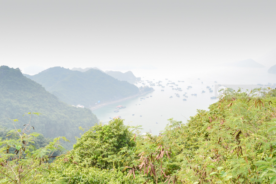 View Cat Ba from Canon port