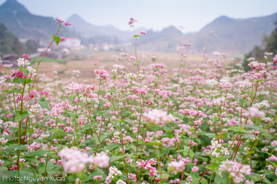 Travel To Ha Giang On Autumn: Heaven On The Rocky Mountains