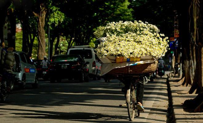 Daisy Flower Hanoi