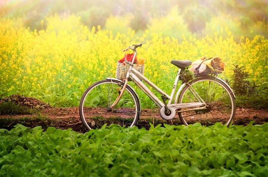 Cai Vang Flower Hanoi