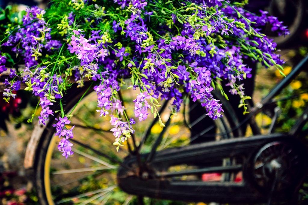 Thach Thao flower Hanoi
