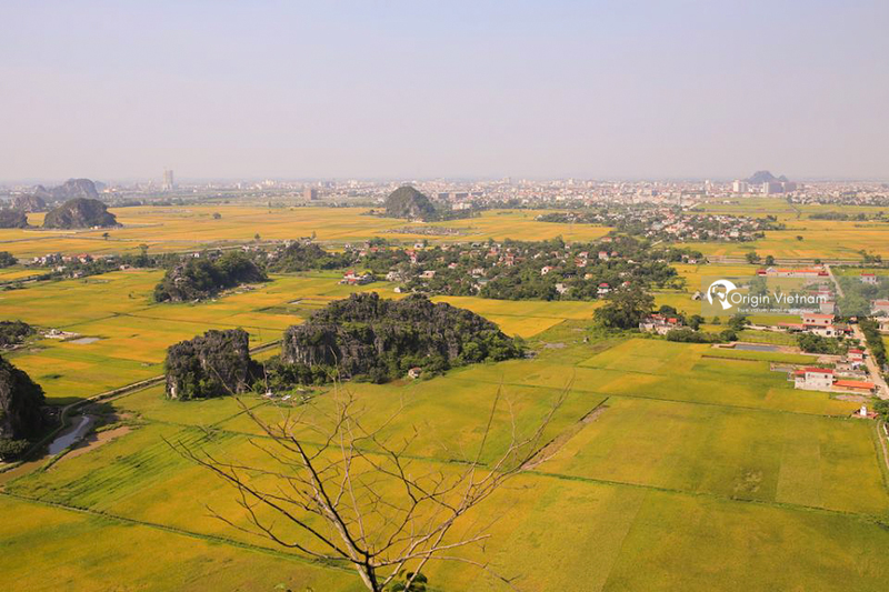 Ripened rice in Ninh Binh from above