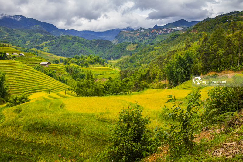 Rice in Sapa