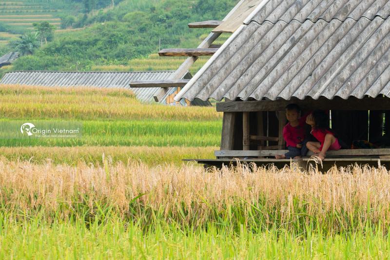 Rice terraces in Hoang Su Phi