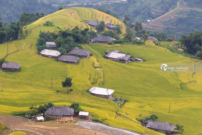 The rice field in Su Su Phi