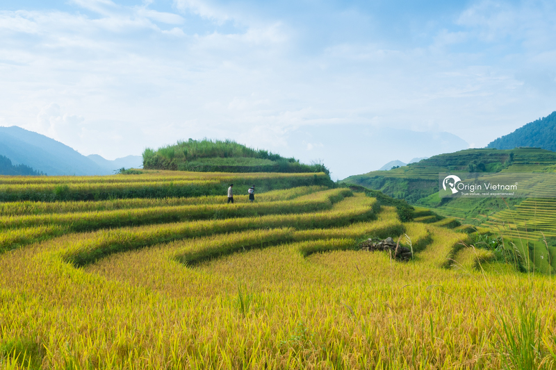The rice field in Y Ty