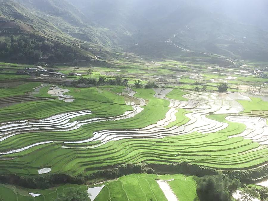 Green field at Mu Cang Chai