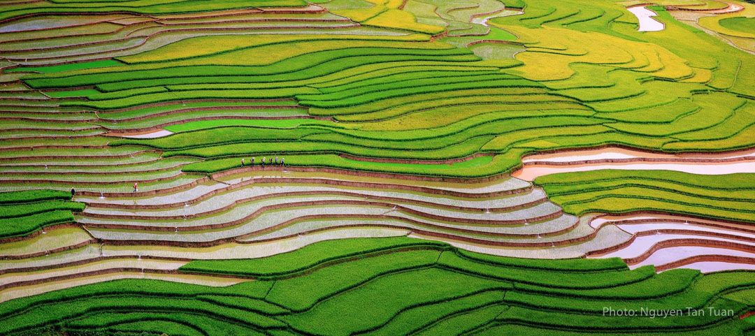 Water Season Flows On Tu Le And Mu Cang Chai Terraced Fields