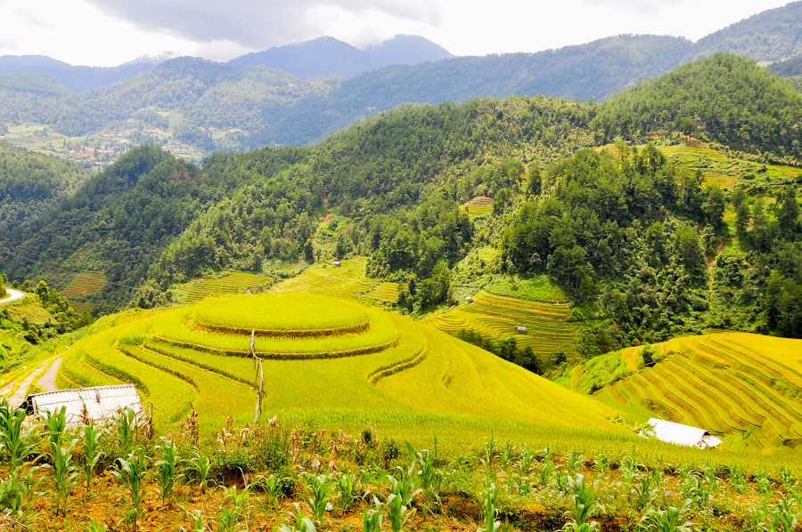 Mu Cang Chai terrace rice field