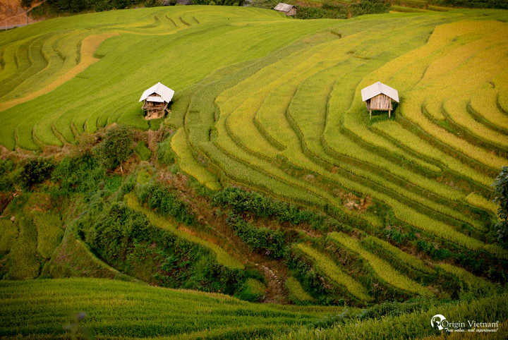 The terrace rice field in Sapa