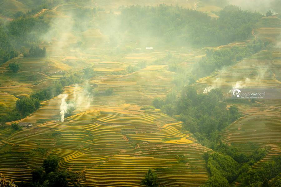 Rice terrace field in Sapa