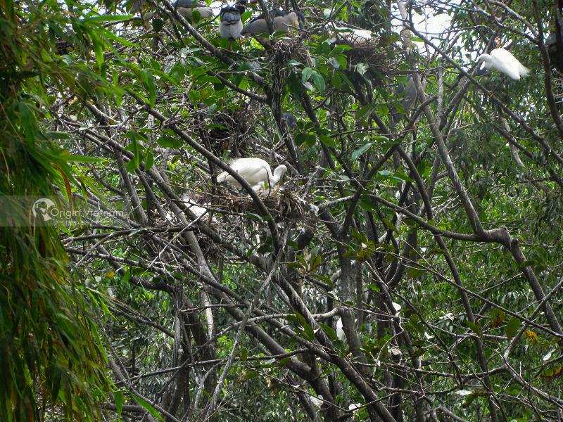 Ca Mau Bird Garden