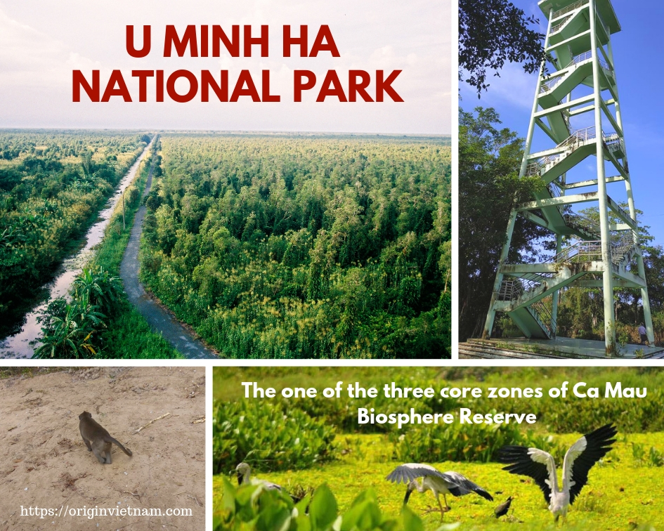 U Minh Ha National Park
