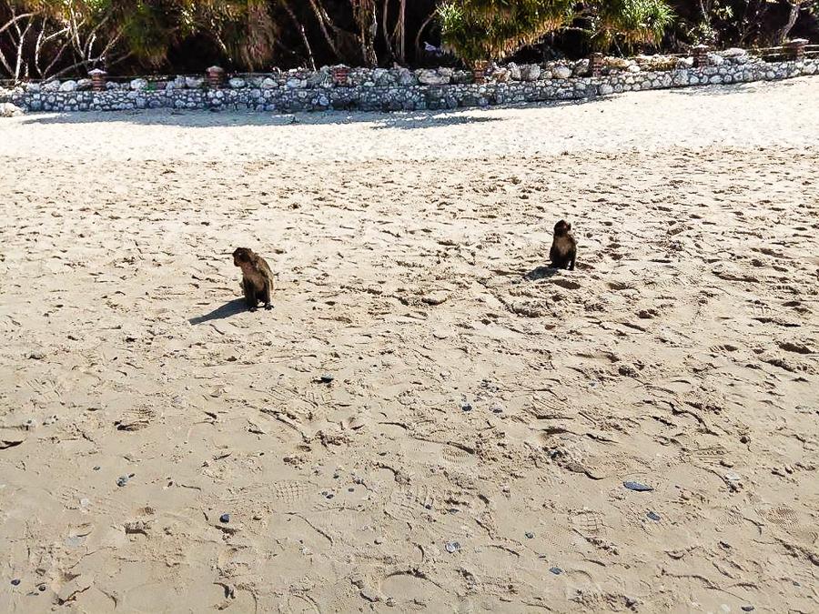 Image Monkey on Beach