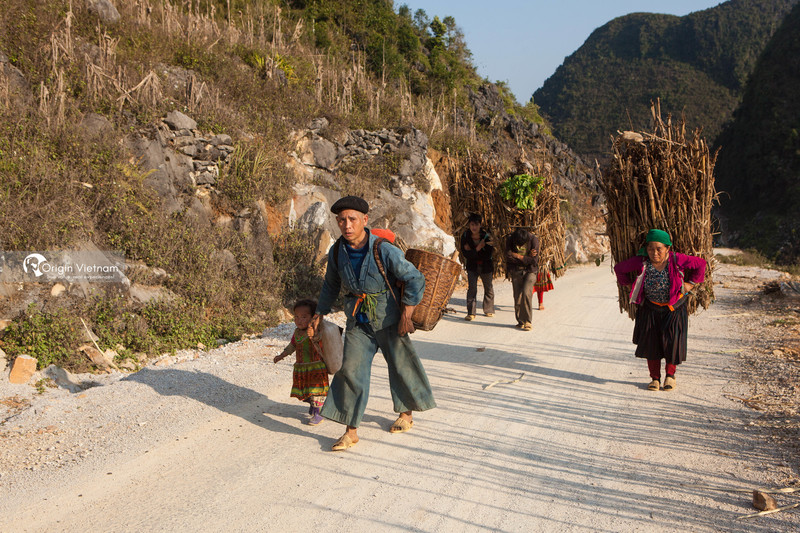 Hmong people carrying firewood and agriculture product home on feet in Dong Van Karst plateau, Ha Giang