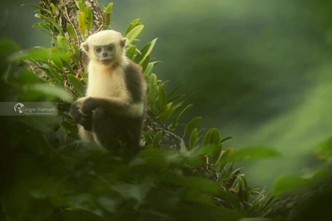 Du Gia National Park