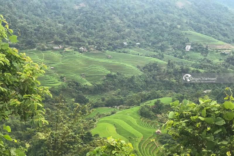Hoang Su Phi terraced fields