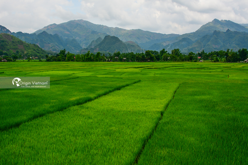 The rice field in Sin Ho