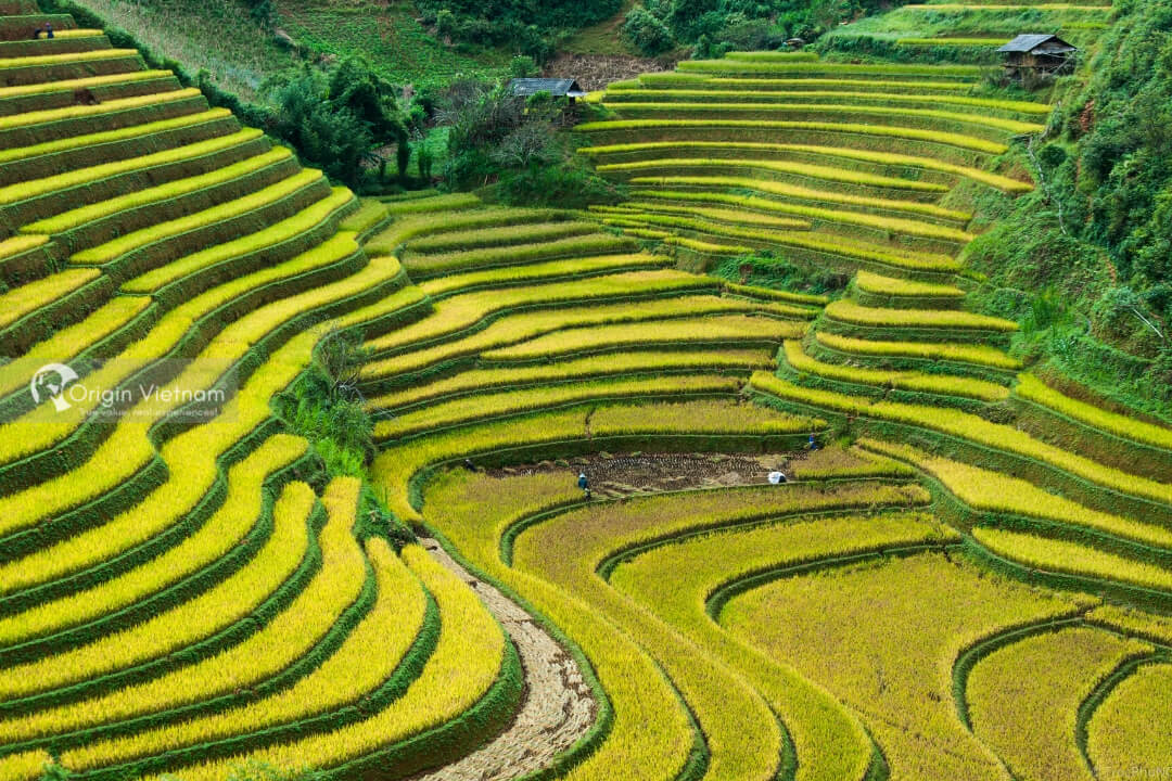 When is the best time to go to Mu Cang Chai?