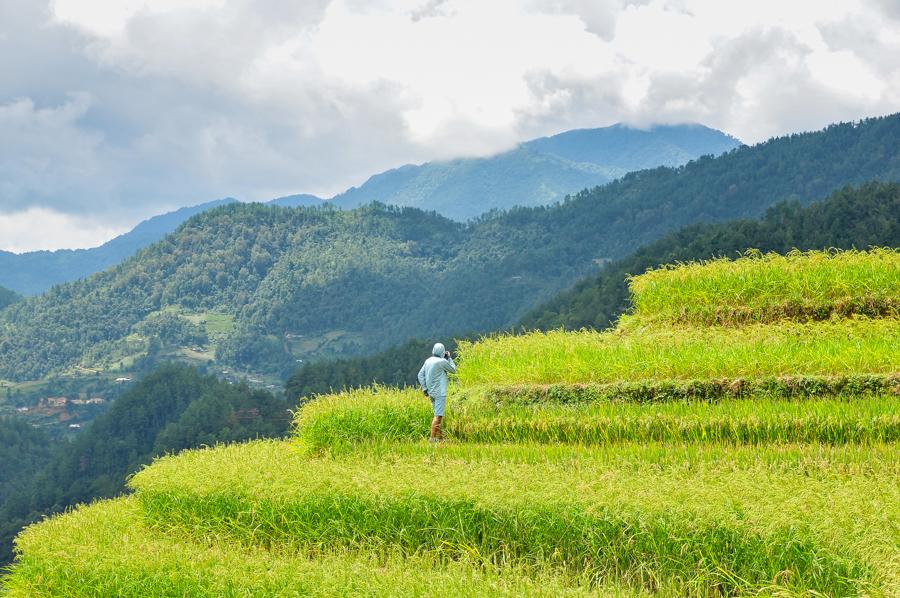 rice field in Mu Cang Cai - September
