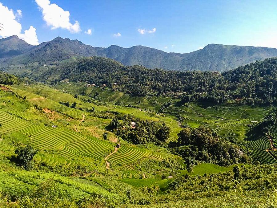Image terrace rice field in Ban Ho Village