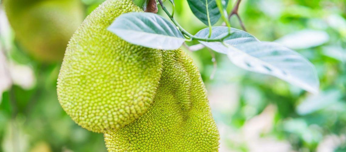 Phong Dien Fruit Garden