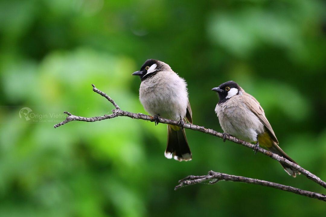 Best Phong Nha Bird Watching Tour