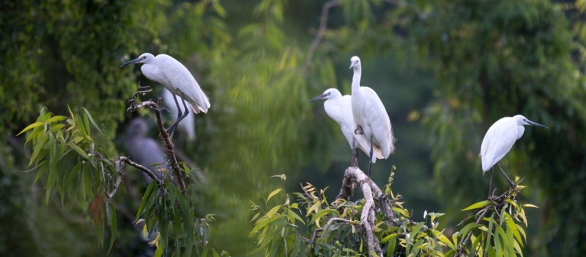 Thung Nham Birds Ecological Tourism Area