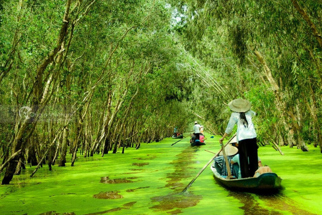 Can Tho Full Day Tour: Tra Su Cajuput Forest & Tinh Bien Market